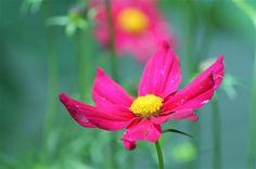 Flower - Photo Contest - National Wildlife Federation