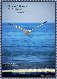 gull on wing over perfect blue sea Beautiful Birds, Animals Beautiful, Photo Animaliere, Image Nature, Am Meer, Sea Birds, Wild Birds, Fauna, Ocean Life
