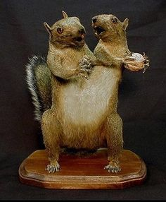 Two for One So much fighting over nuts