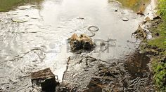 Environmental damge cause in water way polluted with an old shopping trolley, tires, and various other items