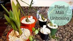 Plant Mail Unboxing - #plantfriends Florida Gardening, House Plants, Lifestyle, Videos, Youtube, Indoor House Plants, Houseplants, Youtubers, Youtube Movies