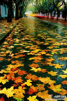Wet road or sidewalk with leaves. Great background!