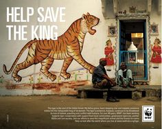 The #tiger is the soul of the Indian forest - with feline grace and a heart-stopping roar. However, this wonderful big #cat continues to be threatened by habitat loss, poaching and conflict with humans. Click on this fabulous #ad to help save the #king.