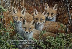 New Artist Ben Waddams proves he's a fantastic addition to the team with this Fox Cubs Materclass in #oils now available on ArtTutor. Oil Painting Lessons, New Artists, Animal Paintings, Rock Art, Cubs, Om, Wildlife, Crafts, Animals