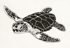 black and white sea turtle clip art - Google Search