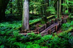 """""""Visit Cathedral Grove to see massive old growth Douglas Fir. It is only minutes from Parksville and Qualicum Beach!"""" - Tammy Schmidt, 2013 myPQB Story Contest #vancouverisland #explorebc #canada"""
