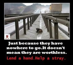 help a stray. please.