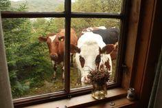 Marsha Harris Scott: Animal Crackers