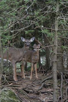 Rockwood Park in Saint John, New Brunswick    photo taken on my Canon RebelXT