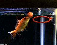 I want this for my fish! Haha