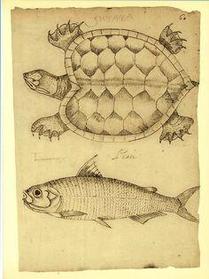 Turtle and Fish Illustration Vintage Facsimile by CarambasVintage