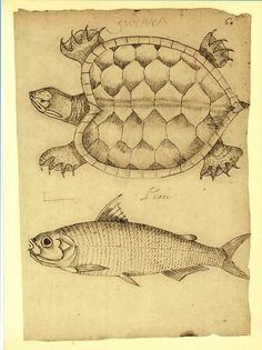 Turtle and Fish Illustration Vintage Facsimile by CarambasVintage