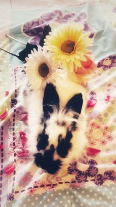Bubbles the bunny