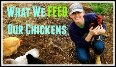 What We Feed Our Chickens~