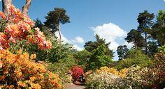 Sir Harold Hiller Garden Hampshire