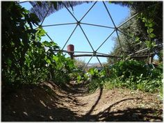 geo dome | Geodesic Domes with plant Cover - Dome design, construction, rental ...