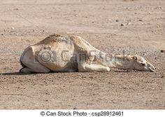 camello acostado - Buscar con Google Camel, Google, Animals, Nativity Sets, Animales, Animaux, Camels, Animal, Animais