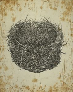 Nest of the Noisy Friarbird, Etching, 2008, by Sandy Rigby