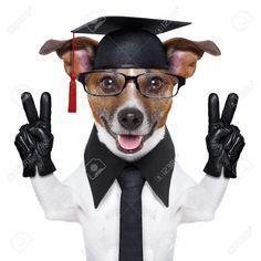 Scioli Universitario con lo do dedo en V