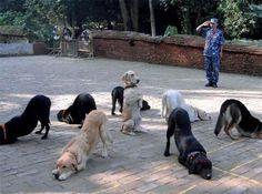 何の儀式だよw  |かわいい動物botさんのついっぷるトレンド画像 - http://tr.twipple.jp/p/8b/531371.html?__from=nebigtop
