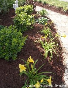 How to Create a Landscape Plan! This gal is a wealth of information for your garden projects!