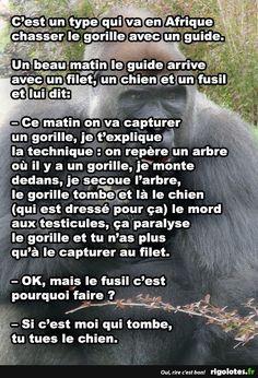 Attention! Gorilla! - RIGOLOTES.fr