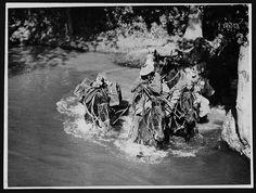 War horses, WWI
