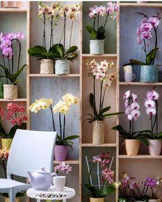 nichos que parecem terem sido criados com pallets acomodam orquídeas em vasinhos lindos tudo naquela paleta doce e suave das candy colors - das orquídeas à pintura dos nichos... Um charme!