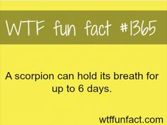 Wtf Fun Fact #1365 A Scorpio can hold his breath for up to 6 days