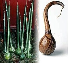 Large Fruited Dipper Gourd 10 Seeds - Craft Project! by Hirts: Seed; Vegetable. $0.01. Dipper Gourds can grow on trellis or on the ground. Grow and dry for ladles, dippers, or just decoration. 10 Seeds. Maturity: 125 Days. Pick gourds, when the vine is dry. GOURD: Plant gourds if for no other reason than because they're fun! They come in a delightful, wacky array of shapes, colors, and sizes and are sure to bring a smile when you harvest them. Many will grow up fence...