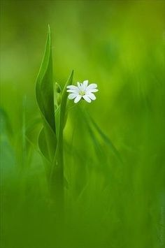 green with white flower Amazing Flowers, White Flowers, Beautiful Flowers, Flower Wallpaper, Nature Wallpaper, Iphone Wallpaper, Dame Nature, Flower Pictures, Belle Photo
