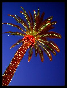 Florida Christmas Tree #beallsflorida