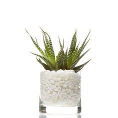$35.00 - Mini-Succulent