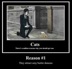 Number one reason to have a cat
