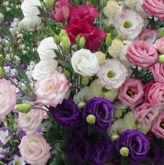 lisianthus - see the pink colors - they range from dark to light and are so elegant and feminine