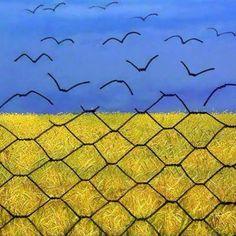 #Ukraine #revolution #maidan