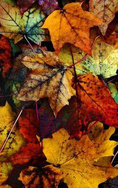 I miss Autumn so much!