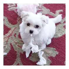 #tbt to baby Lucy and her first encounter with a tissue. Who knew it would start a life long obsession