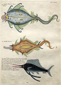 Poissons, Ecrevisses et Crabes, de Diverses Couleurs, 1719, Louis Renard. Link…  (via uncertaintimes: hanuman)