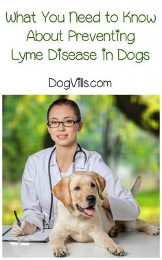Prevent Lyme Disease in Dogs Month may be an awkward mouthful to say, but it's extremely important.  Every April, the importance of preventing Lyme disease is highlighted with Prevent Lyme Disease in Dogs Month because April is the month when dogs are most prone to contracting this disease. In honor of this important month let's take a look at how we can keep lyme disease our of our pet's lives.