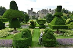 Levens Hall topiary garden begins annual 6 -MONTH trimming of ...