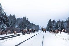 . Banff National Park, National Parks, Western Canada, Canadian Rockies, Train Tracks, Great Shots, Rocky Mountains, British Columbia, Wander