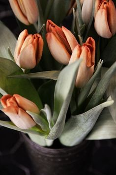 """available now..tulips ...stimulation to think """"spring"""""""