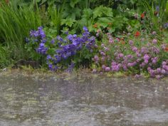 A Retirement Blog: Be Careful What You Wish For. My request for rain was answered in torrents by a thunder god.