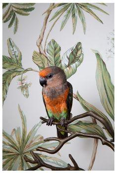« Birds Of A Feather » : Des Perroquets Posent Pour La Photographe Claire Rosen