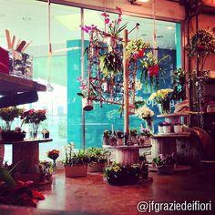 Gli spazi incantati e floreali di Urban Flower, complimenti a jfgraziedeifiori ;-)  Scatta a Le Piazze, aggiungi #instapiazze e la tua foto va in mostra sui nostri ambienti social! #lepiazze #lifestyle #shopping #castelmaggiore #urbanflower #fiori