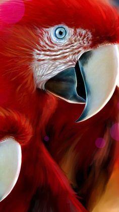1080x1920 Wallpaper parrots, pair, beak, color