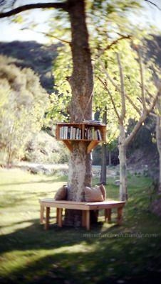 Una panchina ed uno scaffale intorno all'albero per dedicarsi alla lettura