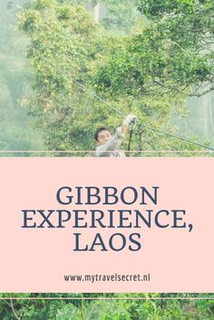 Een must-do in Laos: de Gibbon Experience. Backpacken Laos | Gibbon experience Laos | Rondreis Laos | Backpacken zuidoost-Azië