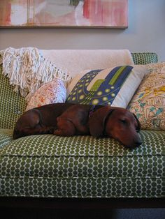 Lena Corwin's polka dot green Hable Construction fabric on the couch, plus a cute little dog